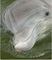 Dolphin Eco Tours