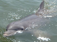 Dolphin Eco Tours | Coupon