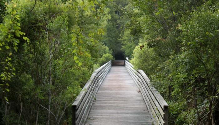 bridge to mitchelville