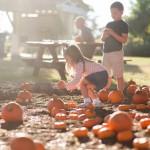 Pumpkin Patch - October