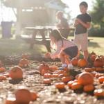 Hilton Head Pumpkin Patch