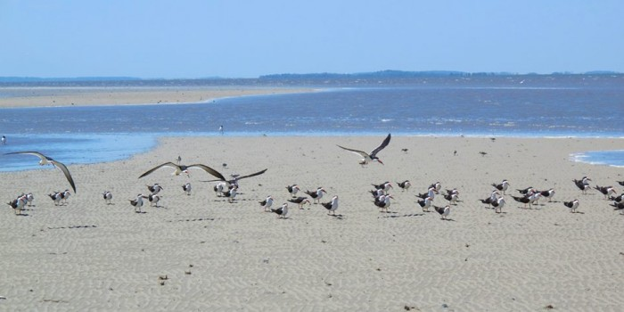 Birds at Mitchelville Beach