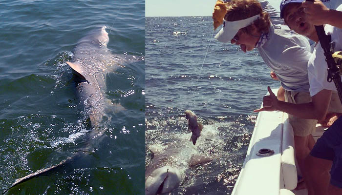 Out of the Blue Shark Fishing