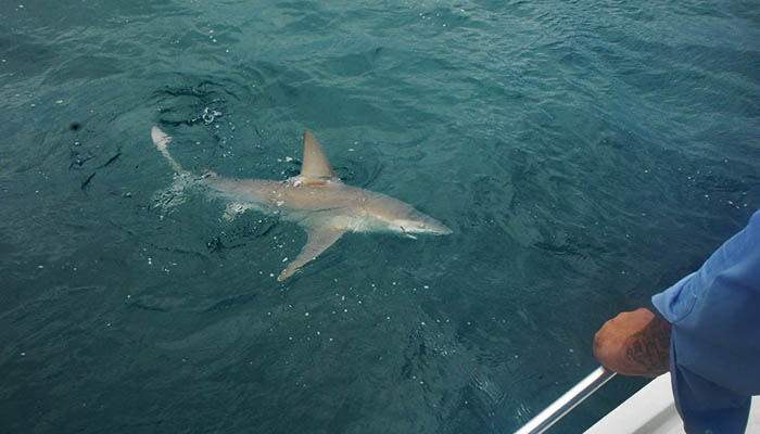 TailTamer Shark Fishing on Hilton Head