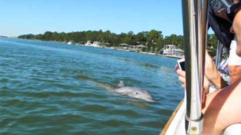 Island Queen Dolphin Nature Tour
