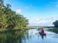 Guided Kayak Nature and Dolphin Tours | Coupon