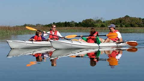 Guided Kayak Nature and Dolphin Tours